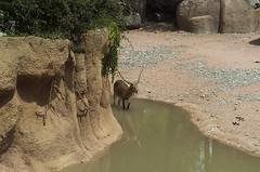 Savana (querin.rene) Tags: renéquerin qdesign parcolecornelle parcofaunistico lecornelle animali animals savana zebra