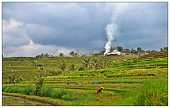 Rice fields in Ubud (Mohamed Essa) Tags: photography bali ubud indonesia ricefield rice riceterrace pixlr smoke