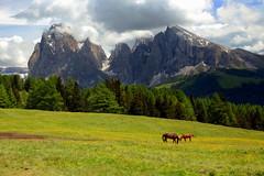 Horses at the Seiser Alm (annalisabianchetti) Tags: mountains montagne dolomites dolomiti sassopiatto sassolungo alps italy paesaggio landscapes houses