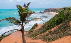 Love Beach - Pipa - Rio Grande do Norte - Brasil (valmirmacario) Tags: pipa brasil praia oceano mar ocean sea beach praiadoamor riograndedonorte litoral paisagem landascape