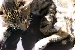 DSC06316 (C*A(t)) Tags: cat straycat street nightmarcat