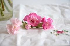 Flowers (Overtherainbow changes to KV Photography) Tags: kvphotography katerinavodrazkova flowers flower pink stills stilllife roses rose pettals tabletop