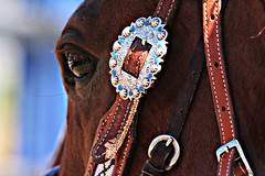 Horse Bling (cherieroshau) Tags: events july 2015 dunn county cherieroshau dickinson