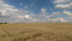 Getreidefeld bei der Schanzenmühle