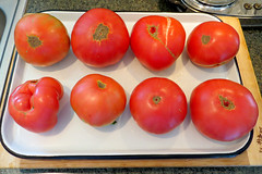 Home Grown Tomatoes 2 August 2016 0456Ri 4x6 (edgarandron - Busy!) Tags: food tomato tomatoes homegrown heirloom