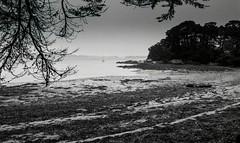 Golfe du Morbihan, B&W, 13 (Patrick.Raymond (2M views)) Tags: bretagne morbihan golfe argentique tmax nikon berder mer plage expressyourself