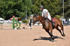 DSC_1077 (2) (ploufjf_64) Tags: paus show jumping chevaux pau 2016