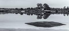 Barruecos  031015-0714 (Eduardo Estllez) Tags: paisaje lago laguna charca agua calma reflejo serenidad apacible rocas granito arboles nublado natural naturaleza airelibre rural horizontal panoramico blancoynegro monocromo nadie parquenatural barruecos malpartidadecaceres caceres extremadura espaa estellez eduardoestellez