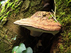Bracket fungus (JulieK (thanks for 8 million views)) Tags: wood brown texture nature mushroom beautiful moss fungi rotten cracked bracketfungus donerailepark canong11 ilobsterit 2015onephotoeachday