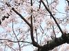 Kwansei Gakuin Daigaku (MochiMochiJapan) Tags: japan university kobe 日本 大学 hyogo nishinomiya takarazuka daigaku 西宮 gakuin 宝塚 兵庫 kwansei 留学 kgu 関学 kangaku 関西学院大学