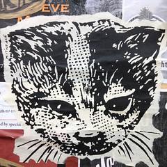 kitty (evil robot 6) Tags: streetart cat graffiti kitten kitty pikeplacemarket postalley