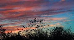 Evening call (Aadilsphotography) Tags: trees pakistan sky orange birds canon photography dam aadil punjab studios islamabad silhoute rawal mehmood fadils