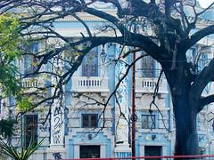 Faculdade de Medicina (Gijlmar) Tags: brazil urban tree window southamerica brasil arbol ventana fenster portoalegre brasilien finestra janela rvore fentre riograndedosul brasile brsil okno amricadosul venster brazili amriquedusud  amricadelsur ablak