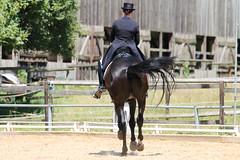 IMG_4501 (dreiwn) Tags: horse pony horseshow pferde pferd equestrian horseback reiten horseriding dressage reitturnier dressur reitsport dressyr dressuur ridingclub ridingarena pferdesport reitplatz reitverein dressurreiten dressurpferd dressurprfung tamronsp70200f28divcusd jugentturnier