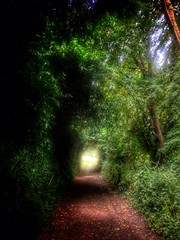 Follow the path to the light (MarcFreak) Tags: dorset tree trees dorchester countryside