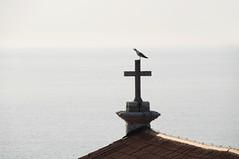 Seagull atop the cross of St. George's Parish Church, Piran / Slovenia (anji) Tags: slovenia slovenija piran pirano adriaticsea istra istria exyu exyugoslavia southeasteurope