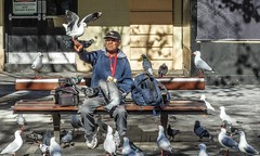A Bird in the Hand is Worth Two in the Bush (Dovid100) Tags: seagulls birds feeding outdoor pigeons sydney australia circularquay