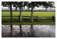 A Rainy Day at Creamer's II (R. Drozda) Tags: wet field rain alaska fence pavement july4 fairbanks 2016 poplartree collegeroad creamersfieldmigratorywaterfowlrefuge drozda