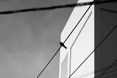 IMG_1735_1 (pavel.milkin) Tags: thailand phuket helios helios442 442 helioslens colour city urban street dove pigeon wire black white blackwhite sky