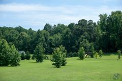 181:365 - 07/15/2016 - Summer day (Shardayyy) Tags: 365 365project project365 nikon d800 potd photoaday d700 50mm shardayyyyphotographycom tree summer