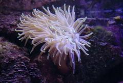 Sea anemone. (Shandchem) Tags: xcaret quintana roo ecoarchaeological park archaeology sea anemone