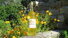 Vin de Villars sur Var (bernard.bonifassi) Tags: bb088 06 alpesmaritimes 2016 thiery counteadenissa