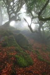 (RicardoPestana2012) Tags: tree forest fog mist scary