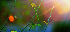Discotheque (VGPhotoz) Tags: light red wild green colors sunshine yellow beans nikon blu prism nikkor fineartphotos outstandingromanianphotographers marculescueugen vgphotoz