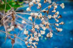 Little Stale Flower (Udaya Karthick) Tags: flowers summer sky flower macro green leaves rock landscape spring nikon fort top hill blues flare stale d7000