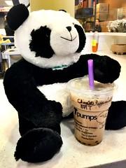 Panda wants bubbles (joelcaceres) Tags: bear food toy panda tea drink boba