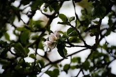 150502-IMG_0457 (matthiaskunz) Tags: bird birds spring blossom ammer 2015 ammertal