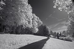 DSC00255re_v1 (vorinami) Tags: nature ir infrared f828 hoya r72