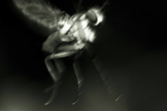Char-El (Eric Gitonga) Tags: ericgitonga kenya nature macro arthropods phylum kingdom arthropoda animal animalia segment segmented head abdomen legs mouth eyes compoundeye simpleeye instar exuvia moult exoskeleton grow develop misunderstood stinger sting egg fertilization sperm female male nairobi njathaini pickengardensestate northernbypass insect insecta thorax 6legs sixlegs wings flight crawl antenna