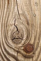 Art In A Knot (designwallah) Tags: toronto ontario canada knot urbanexploration utilitypole laneways alleys ruelles olympusm60mmf28macro