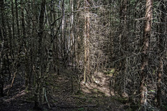 Textures (Ingunn Eriksen) Tags: trees texture branches deadforest forest vestby akershus norway
