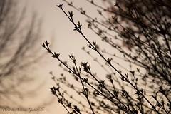 At Nightfall (Arianna PH) Tags: tramonto giardino foglie albero pianta sunset aperto celo
