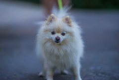 Ssses Hndchen sehr zerzeisst (TM Photography Vision) Tags: dog sony a850 zeiss za 18 135mm 135 basel riehen schweiz