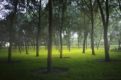 The Glade (Amar Sood) Tags: glade trees landscape fuji fujinon xf18mm fujixpro1 xpro1 nature green