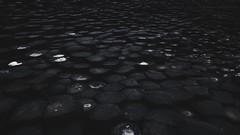 Causeway (SkylerBrown) Tags: bw blackwhite blackandwhite creepy dark geology giantscauseway ireland moody northernireland rock shadows stone texture travel