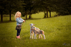 ... new friends ... (Margarita K...) Tags: southwales south wales beautifulwales child childhood fairytales portrait ngc girl sheep nikon d5200 mkphotography margaritakphotography