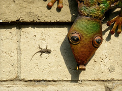 Lizards on My Wall (Bennilover, off for a week's vacation) Tags: lizards lizard baby tiny wall garden ornamental metal watching watering 1inch reptile real