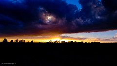 DSC_0164 (timmie_winch) Tags: nikon nikond3000 d3000 august august2016 2016 sun sunset sunsetsuffolk sunsetoversuffolkcountryside sunsetovercornfields sunsetovercornfield silhouette 18105mm 18105vr nikon18105mmvrlens shadows golden goldenhour goldenlight elliedunn ellie eleanordunn ells eleanor ellsdunn dunn landscape landscapephotography landscapephotographer naturephotographer naturephotography nature timwinchphotography tim timwinch winch debenham ip14 suffolk