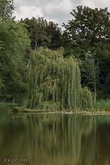Leipzig, Brettschneider-Park, Trauerweide (joergpeterjunk) Tags: leipzig brettschneiderpark outdoor canoneos50d canonef100400mmf456lisusm pflanze baum trauerweide