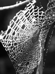 spiders web-8210095 (E.........'s Diary) Tags: eddie rossolympusomdem5markiiscotlandaugust2016newburghfifescotland spider web water droplet rossolympusomdem5markiiscotlandaugust2016newbu