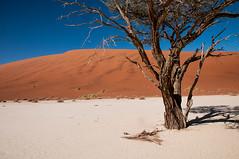 namibia2015-84 (yriis) Tags: namib desert sand immensity uninhabited wildness dune travel 45 red sky blue africa namibia kalahari