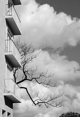 Calme intrieur (Bluefab) Tags: branches arbre nuages blanc peur trange balcons immeuble ciel