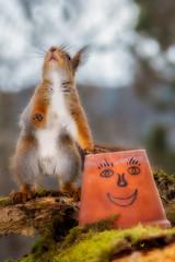 happy friends (Geert Weggen) Tags: red food cooking nature smile face animal mammal happy rodent squirrel funny expression ground pot teapot geert saveearth weggen ilobsterit hardeko