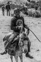 The Knight (Ahmed.Jridi) Tags: poverty bw child streetphotography donkey nb knight rider