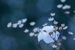 Winter in the spring! (Mido Melebari) Tags: blue winter food white snow plant toronto canada black cold tree green birds canon fly spring guelph bean iso eat saudi 5d snowing 2015