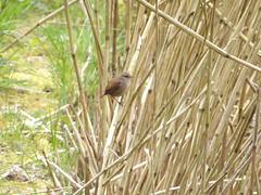 WREN (abiodun ritchie) Tags: bird butterfly wren